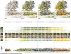 Vegetationsperioden mit Farb- und Blühaspekten, ©️️ TOPOTEK 1