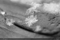 """Snowflake with Macro Tube"" by Jay Callaghan, via 500px."