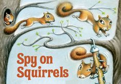 Spy on squirrels (how to become an expert squirrel-watcher)