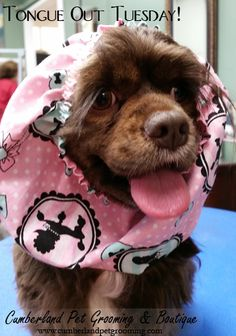 Halle is showing some #TongueOutTuesday pride while modeling one of our new snoods!
