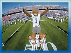 Image Search Results for university of kentucky football
