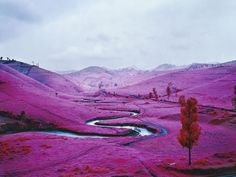 The Congo by Richard Moss via wired: The false-color infrared satellite film was initially used for aerial reconnaissance, showing healthy foliage as pink and red and thereby highlighting camouflage as blue or purple. Here, it is the medium for on-the-ground images from war zones of the Congo to create images which are haunting, surreal and beautiful. #Photography #Congo #Richard_Moss