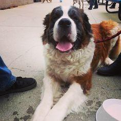 My new friend, Brutus. #dogsofinstagram #BarkinthePark @tidesbaseball #veganinva
