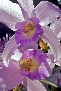 Beauty Of Orchids - Comunidade - Google+