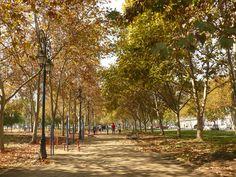 Parque de arboles en otoño invierno,Chile