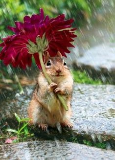 A chipmunk with a flower umbrella, he must be waiting for Noah's ark, he is pretty as a picture.