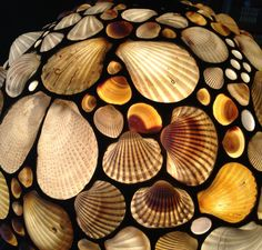Desiree Gillingham                                       www.ShellShades.com                                   So many shells look different with light behind them– most of these shells are white until lighted.