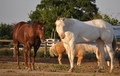 Ranch! Winchester Shotgun, Horses For Sale, Palomino, Ranch, Animals, Guest Ranch, Animales, Animaux, Animal