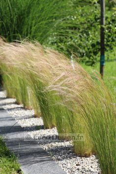 Backyards 425660602279503852 - Idées jardin : 30 bordures qui ont de l'allure ! Source by lenascrap Small Backyard Patio, Backyard Landscaping, Landscaping Ideas, Eden Design, Garden Design Plans, Patio Design, Ornamental Grasses, Ornamental Grass Landscape, Tall Grasses