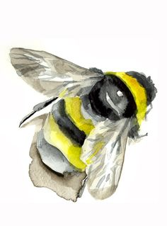 bumblebee - animal watercolor painting - art print. $14.00, via Etsy.