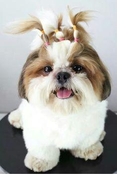 How cute♡♡♡