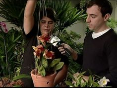 Arte Brasil | Jardinagem - Jardim Suspenso - Christine Damilakos