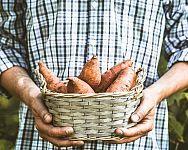 Sadenie mrkvy, hrachu, fazuľe, cibule či kalerábu – kedy a ako Sweet Potato Benefits, Benefits Of Potatoes, Root Vegetables, Fruits And Veggies, Sources Of Vitamin A, Fruit Benefits, Yams, Different Recipes, Vegan