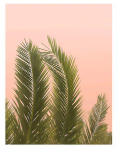 California Palm Trees / Wilder California