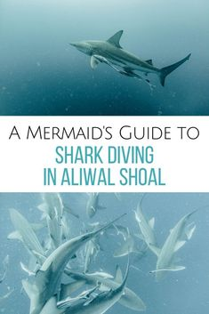 Want to explore one of the best dive sites in the world? Read all about the ins & outs of diving in Aliwal Shoal, South Africa aka shark heaven. Scuba diving in Aliwal Shoal Shark Diving, Reef Shark, Scuba Diving, Sharks, Adventure Awaits, Adventure Travel, Africa Destinations, Travel Destinations, Travel Tips