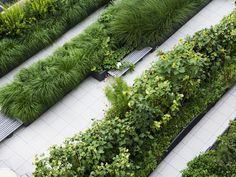 Dirtworks Landscape Architecture | Simons Center for Geometry and Physics | The linear shapes of the planting beds create strong lines to blend with the architecure and benches are provided to rest, study, or converse with a friend