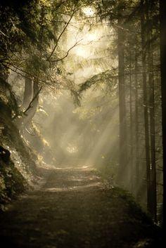 Sun Rays, The Enchanted Wood