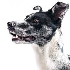 6 Weird Things Dogs Are Hardwired To Do All Dogs, Best Dogs, Choosing A Dog, Types Of Dogs, Animal Books, Dog Portraits, Embedded Image Permalink, Snuggles, Dog Days
