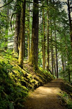 pacific northwest landscape photography - I would love to walk this trail. Ha, as long as it doesn't get dark while I'm out there.