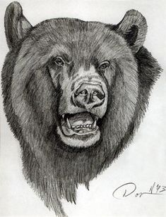 Bear Face Pencil Drawing