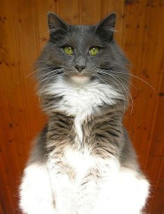 Gorgeous Cat With A serious Stare