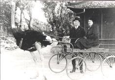 odd weird photos   photo taken about 1917 at S. Pasadena, CA