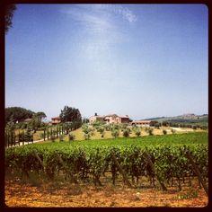 Vineyards. Go local - Sartoria is in Italia. #tailored #Weddings in #Italy