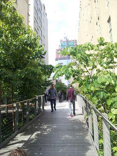 Courgette Basilic en ville | Végétaliser la ville
