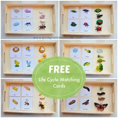 FREE Life Cycle Cards for practicing exactness, visual discrimination Montessori Science, Montessori Practical Life, Montessori Homeschool, Montessori Classroom, Montessori Toddler, Preschool Science, Preschool Activities, Dinosaur Activities, Homeschooling