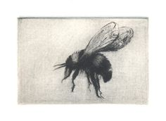 Bumble Bee Etching - Dry Point - 2 x 3
