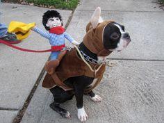 satchmos boston terrier halloween costume - Halloween Costumes In Boston