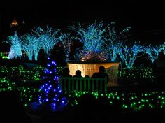 Holiday lights in the Atlanta Botanical Garden