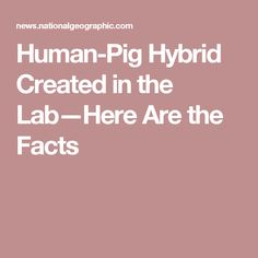 Human-Pig Hybrid Created in the Lab—Here Are the Facts