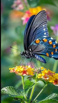 Cute butterfly Wallpapers for Mobile . Cute butterfly Wallpapers for Mobile . Cute butterfly Wallpapers for Mobile Phones Wallpaper Cave Most Beautiful Butterfly, Beautiful Bugs, Cute Butterfly, Butterfly Flowers, Butterfly Mobile, Monarch Butterfly, Beautiful Pictures, Beauty Butterflies, Types Of Butterflies