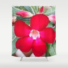 PERFECT RED Shower Curtain by Annie Koh - $68.00