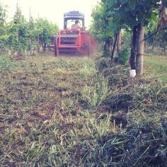 Prove di pacciamatura usando le erbe da covercrop. Le macchine dei nostri vecchi tornano utili. Curioso di capire che succederà sotto a quell'erba tra qualche settimana. Di sicuro la terra rimarrà più soffice e umida.