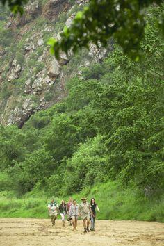 Walk through the African bushveld...