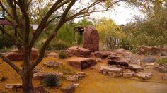 Mojave Cactus and Succulent Collection #SpringsPreserve