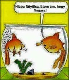 Funny Times, Puns, Funny Animals, Haha, Motivational Quotes, Funny Pictures, Jokes, Fictional Characters, Hungary