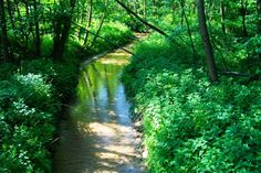 Potok Rudno w lesie Orlej