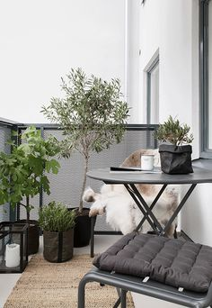 Small-balcony-furnishing-styling-interior-small-balcony-design-styling-balkonmöbel-möbel-balkon-design-klapptisch – l e o n o r e – diy - Balkon Ideen 2020 Small Balcony Design, Tiny Balcony, Outdoor Balcony, Outdoor Gardens, Outdoor Decor, Balcony Ideas, Balcony Gardening, Backyard Ideas, Garden Ideas