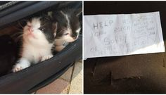 For the love of animals. Pass it on  .Abandoned kittens left in a suitcase with a cruel note written next to them.