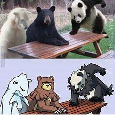 Meme Bears as pokemon