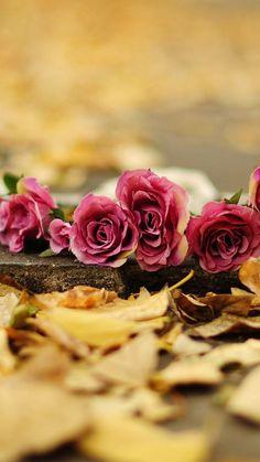 Rose Images, Landscape, Plants, Beautiful, Stove Heater, Backgrounds, Wattpad, Art, Photographs
