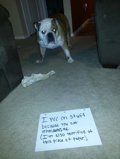 I pee on stuff because the cat intimidates me (I'm also terrified of this piece of paper)!