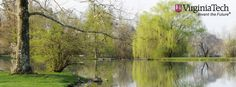 The Duck Pond in spring