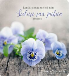 Happy Vibes, Enjoy Your Life, Blue Flowers, Wise Words, Anna, Messages, Thoughts, Mindfulness, Photography