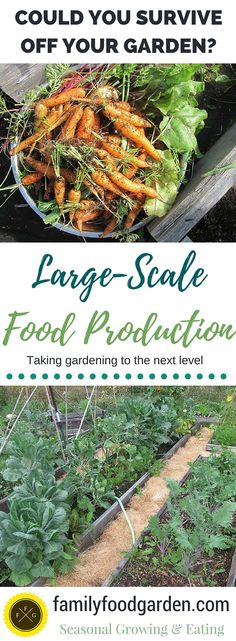 Large-Scale Vegetable Gardening to Feed your Family