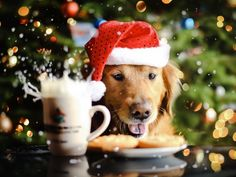 cute animals - funny animals - dog - best friends - love - tongue - chien - santa - chritmas - noel