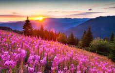 Обои картинки фото природа, горы, лето, свет, солнца, лес